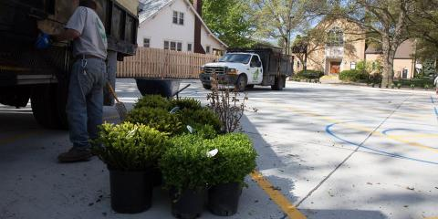 4 Types of Plants & Shrubs You Can Buy at Your Local Nursery, Grant, Nebraska