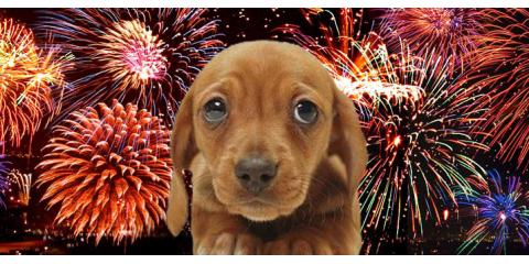 Fireworks Pet Safety 101: From Your Local Veterinary Hospital, Ewa, Hawaii
