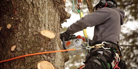 5 Signs You Should Hire a Tree Removal Company, Manhattan, New York