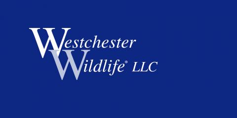 Westchester Wildlife, Animal Control, Services, Brewster, New York