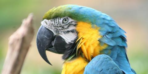 The Pet Clinic is Honolulu's Premier Destination for Top-Notch Bird Care, Honolulu, Hawaii