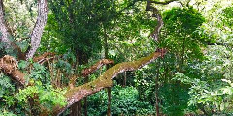 A Cultural Site Steeped in Tradition: Conservation at Waimea Valley, Koolauloa, Hawaii