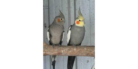 birds for sales, Manhattan, New York