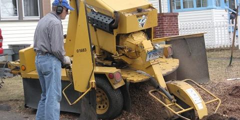 Tree & Stump Removal Frequently Asked Questions , West Hartford, Connecticut