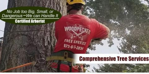 Woodpecker Tree Service In Wharton Nj Nearsay