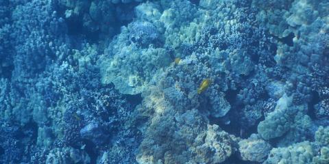 Discover Kealakekua Bay on a Snorkeling & Kayak Tour, Kealakekua, Hawaii
