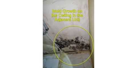 3 Ways to Prevent Mold Growth at Home, Lincoln, Nebraska