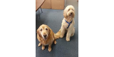Why You Should Be Pro Puppy in the Workplace, Rochester, New York