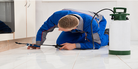 Target Pest Control, Pest Control and Exterminating, Services, Rush, New York