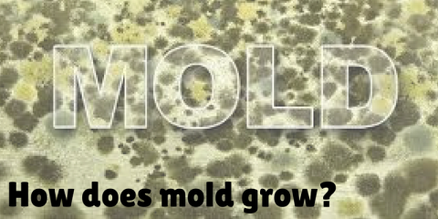 Just the Facts on MOLD, Columbia, Missouri