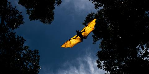 Why Are Bats Important to the Ecosystem?, New Milford, Connecticut