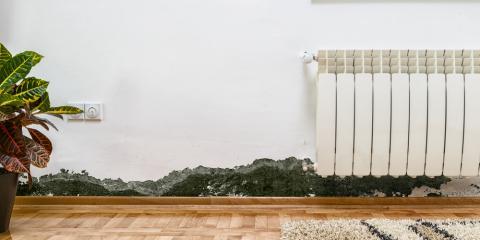 5 Warning Signs Your Home Needs Immediate Mold Remediation, Philadelphia, Pennsylvania