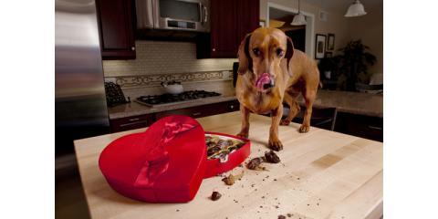 Waipahu's Veterinary Hospital Explains What to do if Your Dog Eats Chocolate, Ewa, Hawaii
