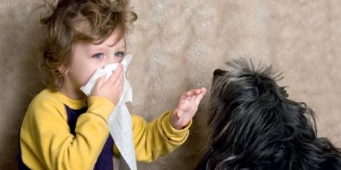 Is Your HVAC System Making Your Allergies Worse? Contact Walnut Creek For Quality Air Conditioning Maintenance, Concord, California