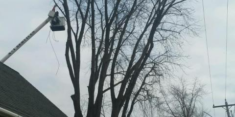 5 Signs You Need Tree Removal Services, Grand Rapids, Wisconsin