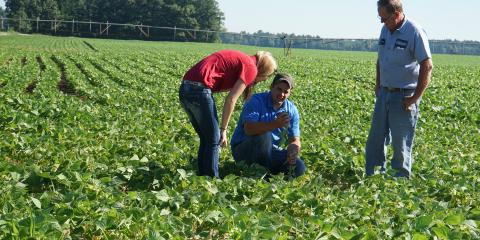 Farming Services: 4 Top Crop Scouting Tips, Adams, Wisconsin