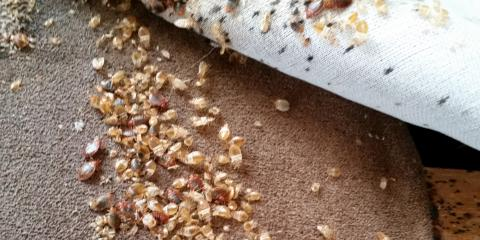 What You Should Know About Bedbug Winter Behavior, Rochester, New York