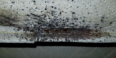 Why DIY Solutions for Bedbugs Are a Bad Idea, Rochester, New York