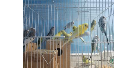 birds for sales , Manhattan, New York