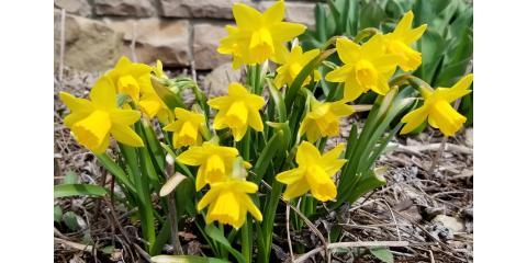 Summer IS coming!  Look ... flowers!, Mount Vernon, Ohio