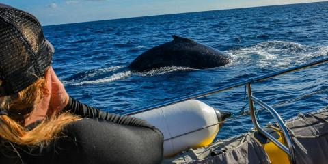 4 Tips for Making the Most of Your Whale Watching Experience, Waianae, Hawaii