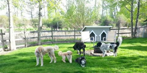 K-9 Camp & Boarding Retreat, Pet Boarding and Sitting, Services, Kalispell, Montana