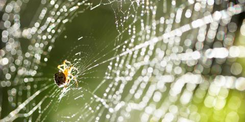 3 Pest Control Tips to Prevent Spider Problems This Spring, St. Louis, Missouri