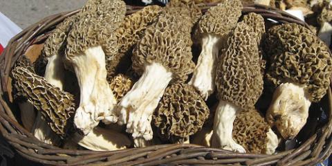 La Crosse & Eitzen Pros Offer 3 Tips for Finding Morel Mushrooms, Eitzen, Minnesota