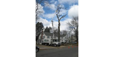 The Benefits of Tree Removal, West Hartford, Connecticut