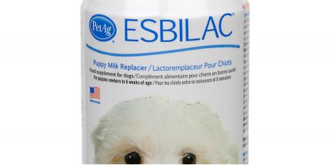 milk for puppy available., Manhattan, New York