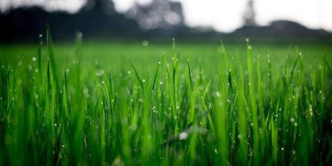 Going Green Lawn Services LLC, Lawn Care Services, Services, Fenton, Missouri