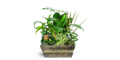 Lucky Enough to Receive a Flower Delivery? 3 Tips For Effective Plant Care, Brooklyn, New York