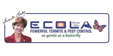 Can you remember your last termite inspection? , Oxnard, California