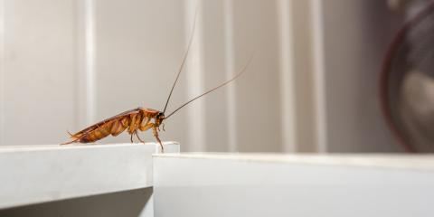 5 Fun Facts Everyone Should Know About the Cockroach, Rochester, New York