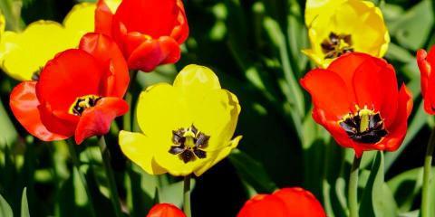 Montana Gardens, Landscape Contractors, Services, Whitefish, Montana