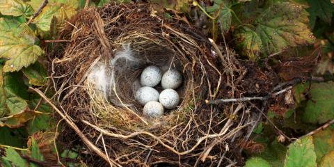 Wildlife Control Best Practices: 3 Ways to Keep Birds From Building Nests in Your Home or Business, St. Louis, Missouri