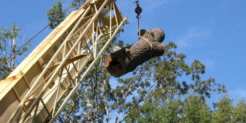 Lamb Tree Service, Tree Removal, Services, Dexter, Kentucky