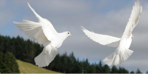 3 Unique Benefits of Funeral Dove Releases, Covington, Kentucky