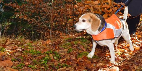 3 Fall Safety Tips for Your Pet , Churchville, New York