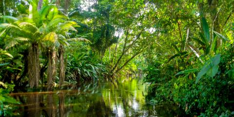 3 Fun Facts About the Amazon Rainforest, Honolulu, Hawaii