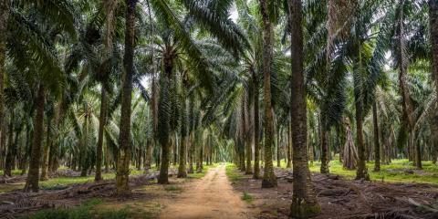 3 Invasive Tree Species Found in Hawaii , Honolulu, Hawaii