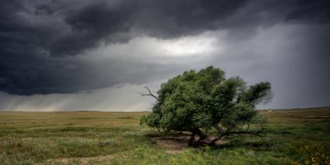 3 Tree Care Steps to Take in Preparation for a Storm  , North Huntingdon, Pennsylvania