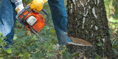 3 Potential Dangers of Do-It-Yourself Tree Cutting  , Midland City, Alabama