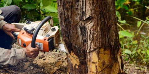 3 Potential Dangers of Tree Removal , Valley Springs, California
