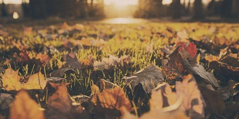 3 Reasons to Hire a Landscaper for Fall Cleanup , Brookfield, Connecticut
