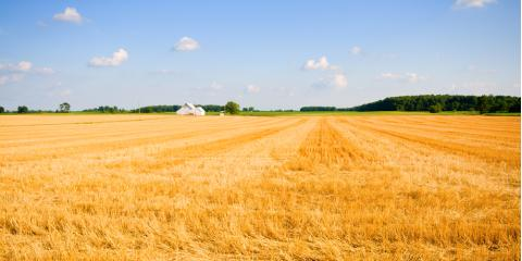 Should You Invest in Farmland? , Lebanon, Kentucky