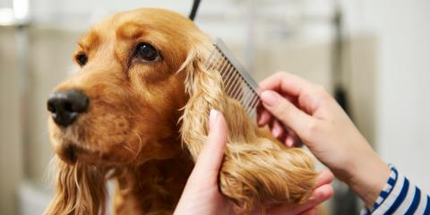3 Reasons to Obtain Your Dog Grooming Certification , Philadelphia, PA, Delaware