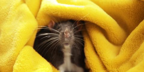 Is It Time for Pest Control? 3 Signs You Have a Rodent Infestation, Columbus, North Carolina