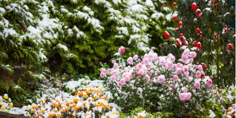 5 Species to Plant in Fall for a Stunning Winter Landscape, Holland, Wisconsin