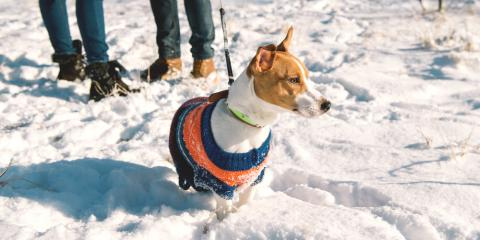 3 Ways to Keep Your Pets Comfortable During the Cold Months, Sycamore, Ohio